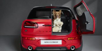 thumbnail MINI opens its doors to paws with Dogs Trust